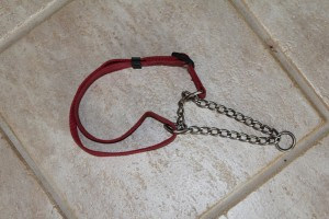 Dog Collars The Different Types And How They Can Be
